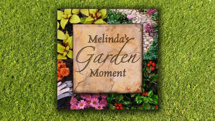 melindasgarden_720_1440080814562.jpg