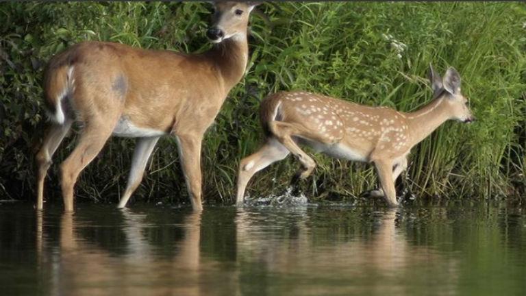 deer_1478548097101.jpg