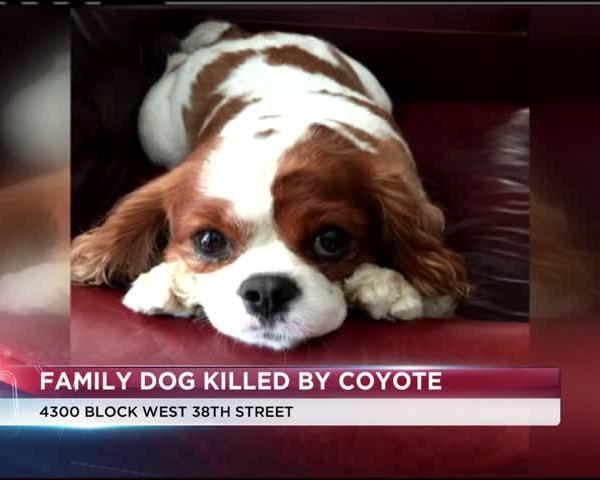 dog killed in millcreek_39451869