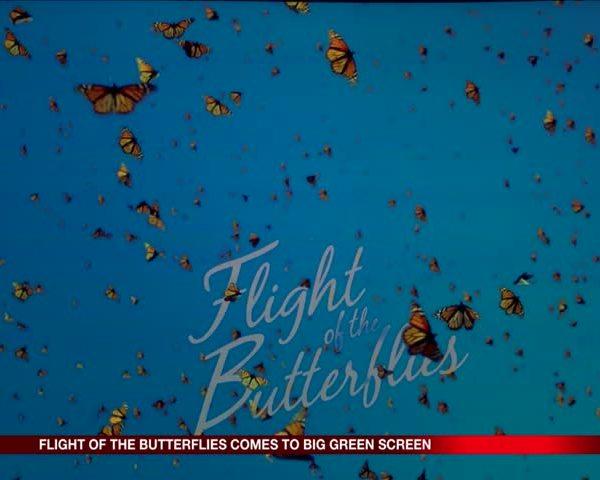 Flight of the Butterflies Big Green Screen
