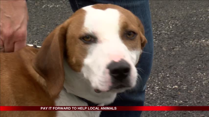 Pay it Forward to benefit local animals