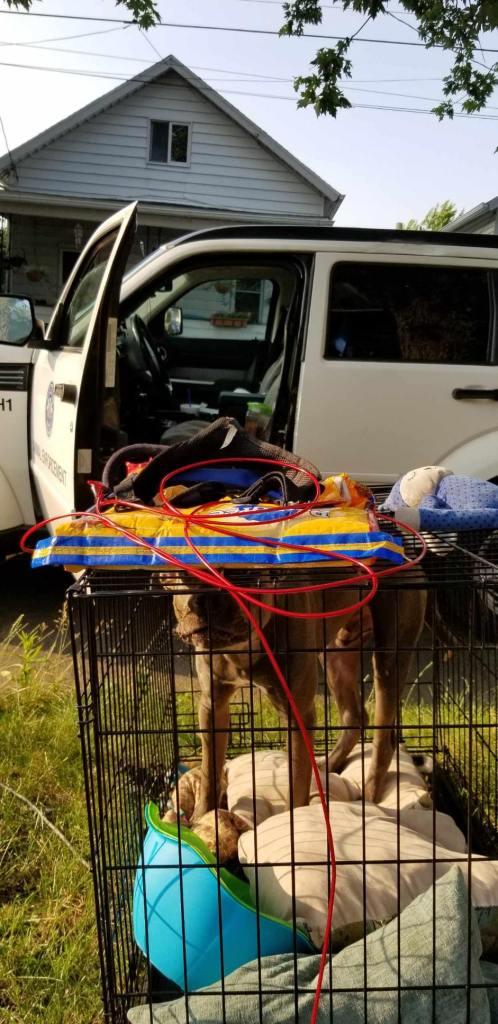 Humane Officers seek information regarding abandoned dog